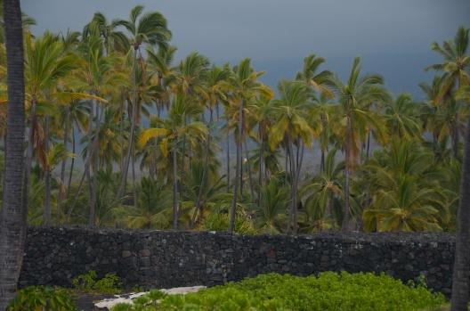 hawaii (16)