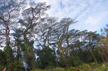 lavatree (3)