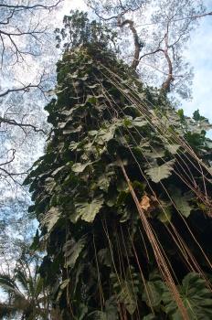 lavatree (4)